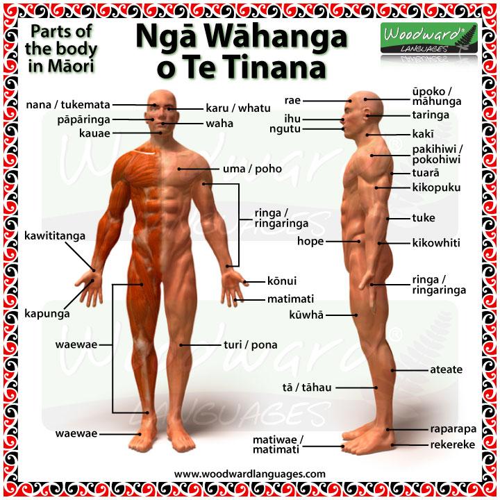 Ngā Wāhanga o Te Tinana - Parts of the body in Māori